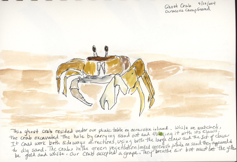 crab sample